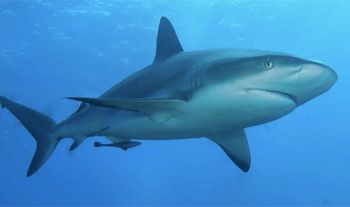 サメの語源はマヤ語