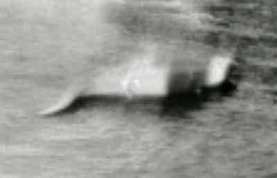 ネッシー ヒュー・グレイの写真