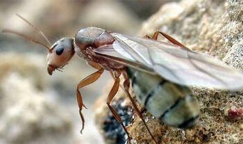 女王蟻の平均寿命は長い