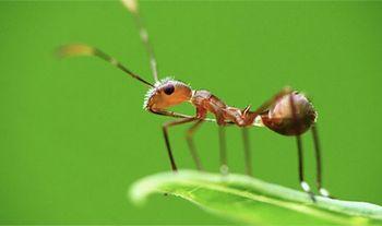 蟻は飛行機から落ちても大丈夫
