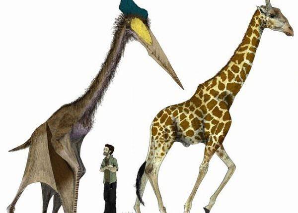 信じられない!実在した古代の超巨大生物と奇妙ないきもの20