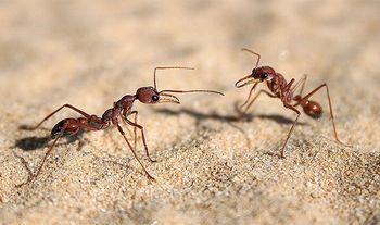 巣の中の20%の蟻は何もしない