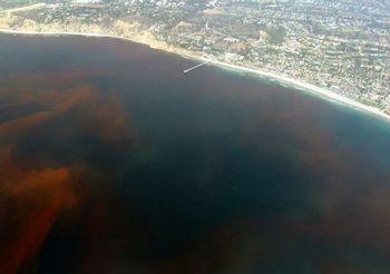 海や土壌の鉄分量