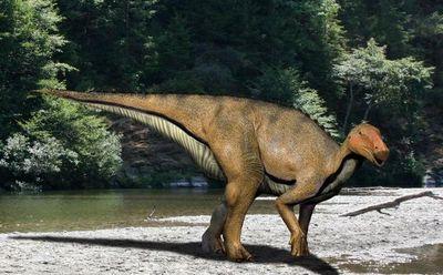 コシサウルス・カツヤマ