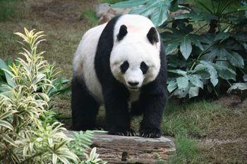 パンダはUMAだった