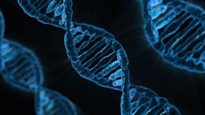 古代ヨーロッパ人のDNAの謎