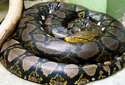 巨大なヘビ