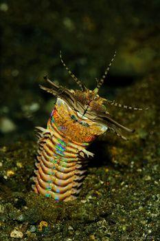 深海發現不可能的生物  專題報導