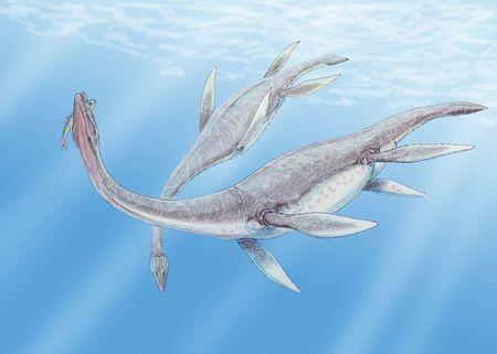 エラスモサウルス