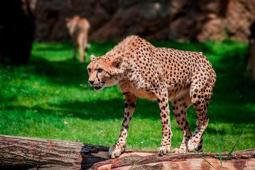 最新の絶滅危惧種!地球から姿を消すメジャーな動物たち