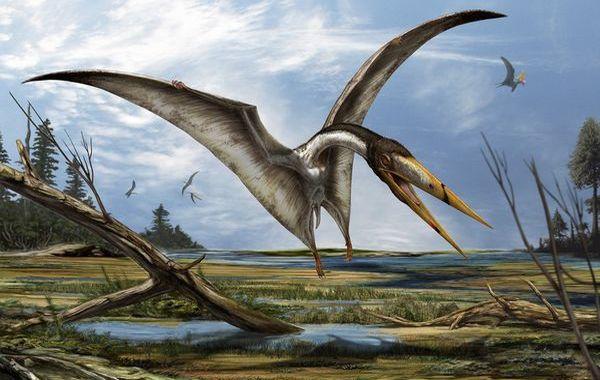 太古の空の覇者翼竜!史上最大の飛行生物とその生態