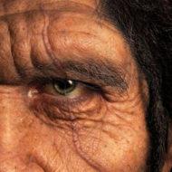 人類 進化