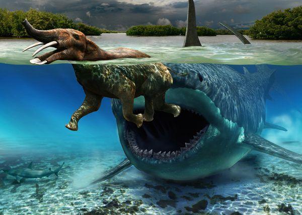 太古の巨大鮫メガロドン!生存の可能性と目撃事例に迫る