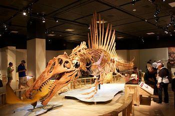 スピノサウルスの化石は買えるのか?
