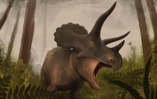 最新のトリケラトプス!消されそうになった大型草食恐竜の真実