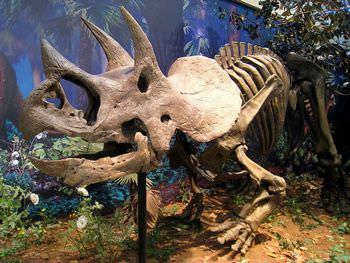 トリケラトプスの化石は買えるのか?