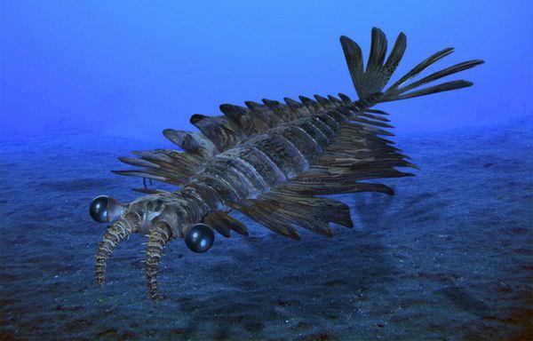 カンブリア紀の生態系の頂点アノマロカリス!不思議で奇妙な生態10