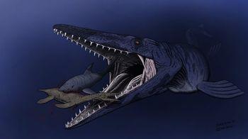 モササウルスの泳ぐ速さは?