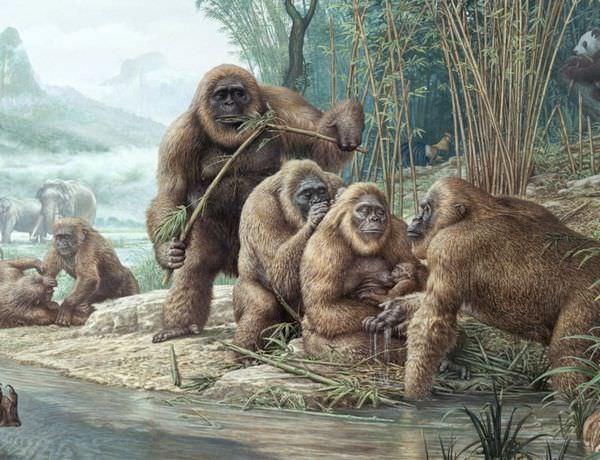 最大の霊長類ギガントピテクス!パンダに敗れた類人猿の生態