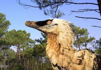 ヴェロキラプトル 羽毛