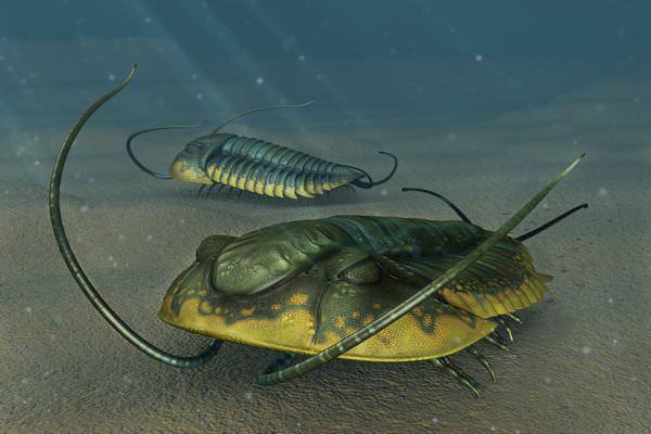 閲覧注意?三葉虫の奇妙な生態と絶滅の理由