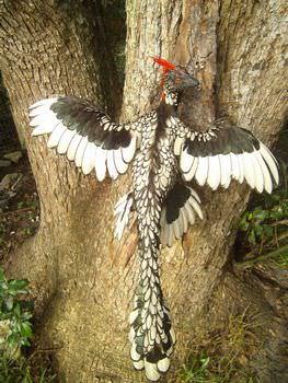 始祖鳥 名前の由来