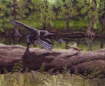 始祖鳥 大きさ