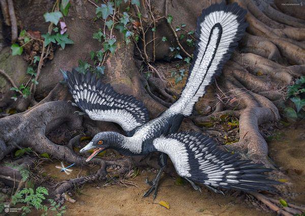 本当に最古の鳥類なの?始祖鳥の飛行能力と恐竜との関係