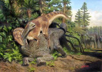 アロサウルスの歯と鉤爪