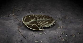 三葉虫 虫の祖先