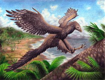 始祖鳥とは