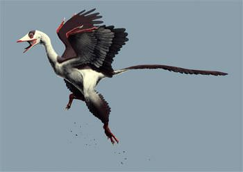 始祖鳥 空を飛べた