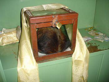 寺から発見されたイエティの頭と手