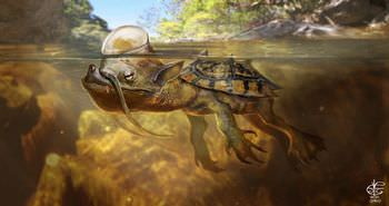 川に逃げ込んだ不思議な生物