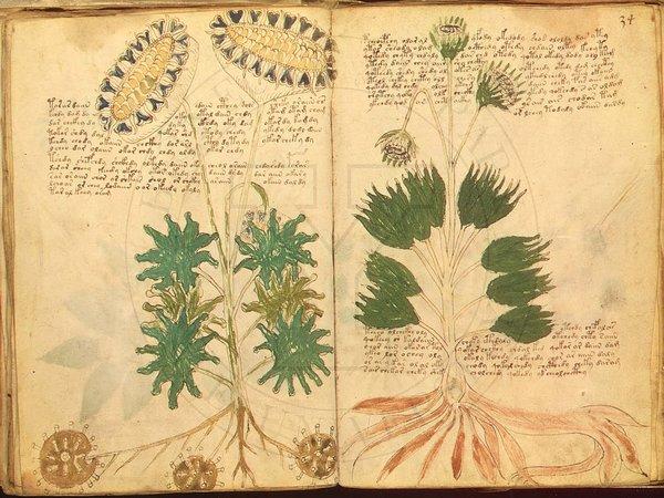 怖い植物に解読不能な謎の文字!ヴォイニッチ手稿に隠された10の真相