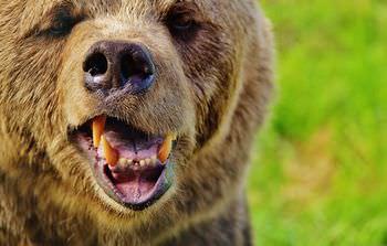 十和利山熊襲撃事件