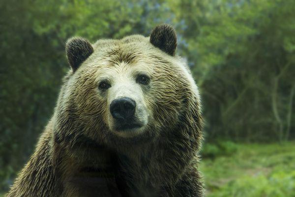 熊の種類はこんなにある!日本の人食い事件や危険なその生態