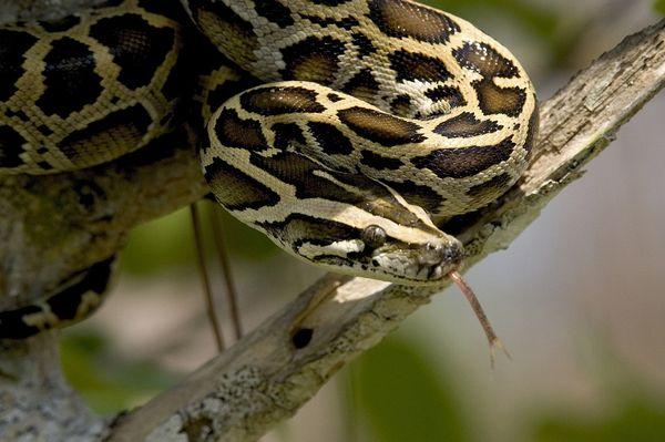 ヘビの種類はこんなにある!世界の巨大ヘビと毒蛇ランキング