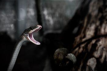 ヘビは獲物の大きさを気にしない