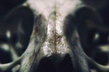 当時の未確認生物や奇形の生物
