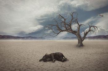 地球温暖化 絶滅