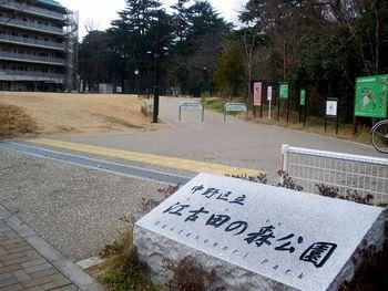 江古田の森