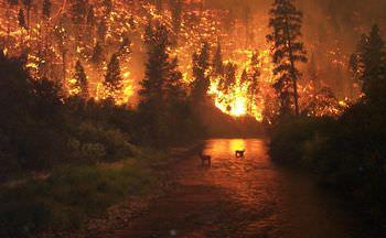 自然災害の増加