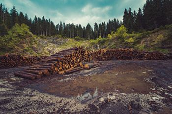 森林 減少
